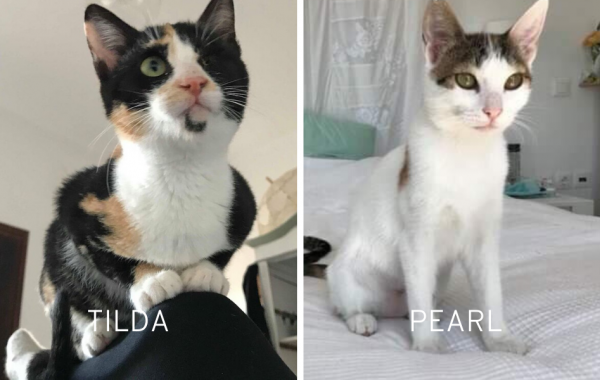 Tilda & Pearl, verschmustes Katzen-Duo, ca. 10 Monate *PS in 88299 Leutkirch*